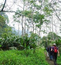 Cuc Phuong park trekking