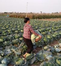 farming with local in Hanoi