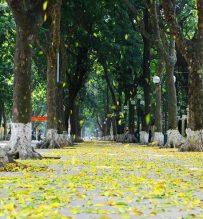 Treeline streets Hanoi