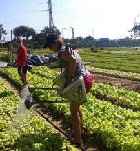 be a famer at tra que vegetable village