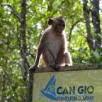 Can Gio – Vam Sat Mangrove Forest Day Tour