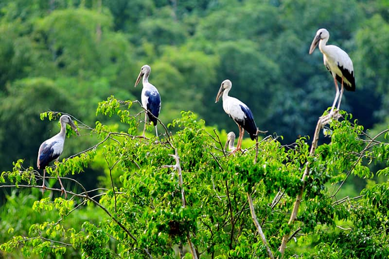 Thun Nham bird park