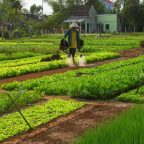 Be A Farmer at Tra Que Herb Village
