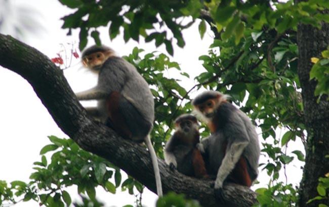 cuc phuong primates