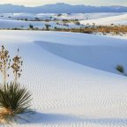 The Sand Dunes Mui Ne